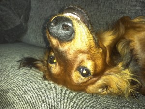 Alf i soffan