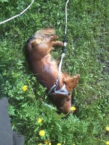 Alf trivs i sommarvärmen!