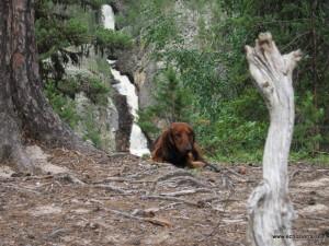 Alf vid Muddusfallet