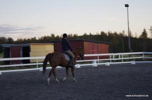 Hästen travar fram till domaren