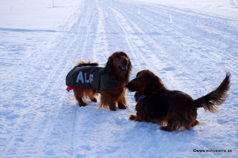 Theo och Alf