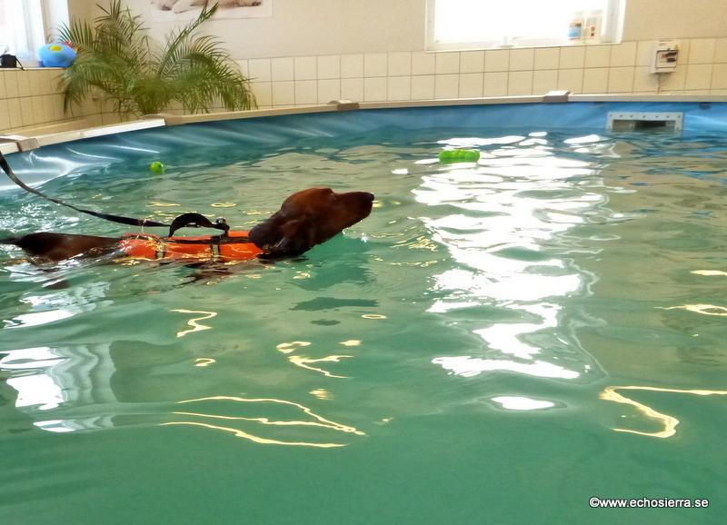 Alf simmar