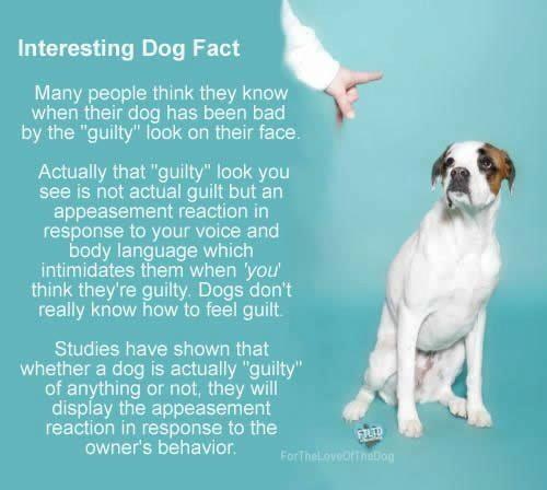 dogfacts