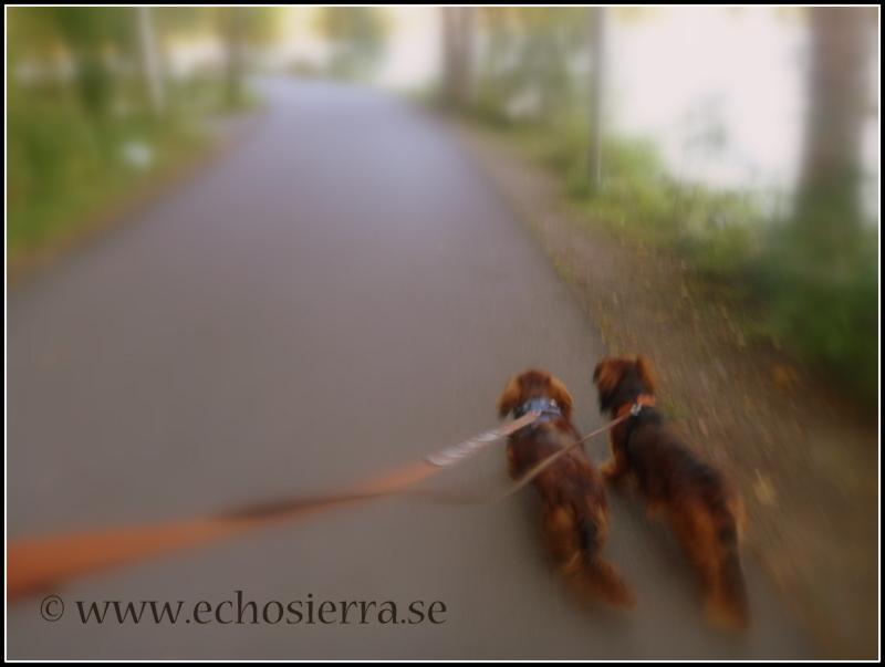 Promenad med taxar