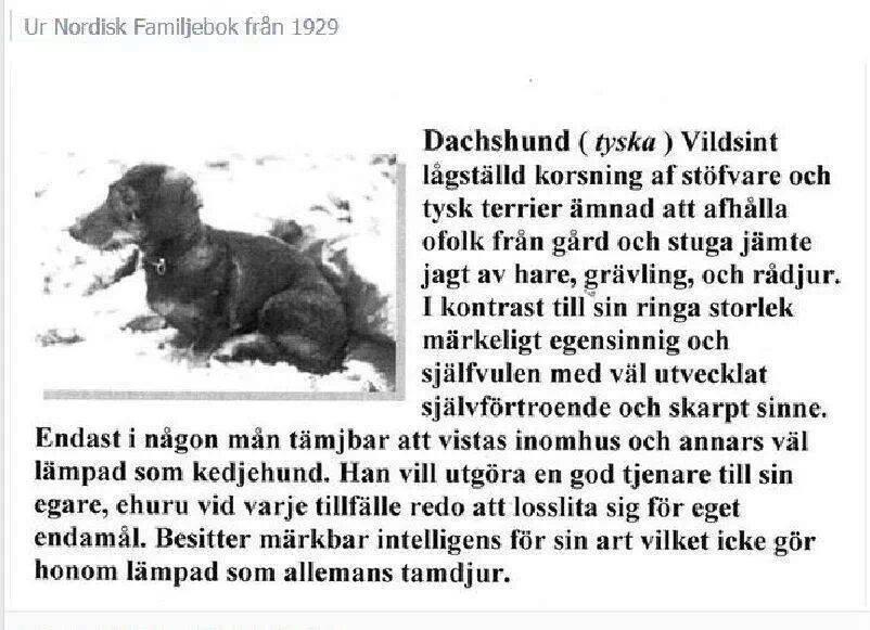 nordisk familjebok 1929