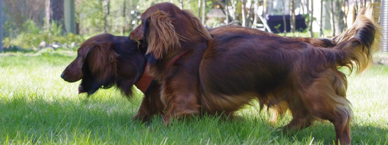 Historien om Alf