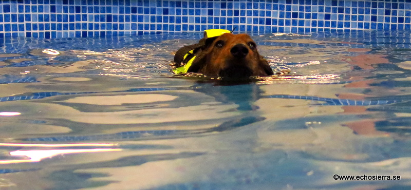 Alf i vattnet
