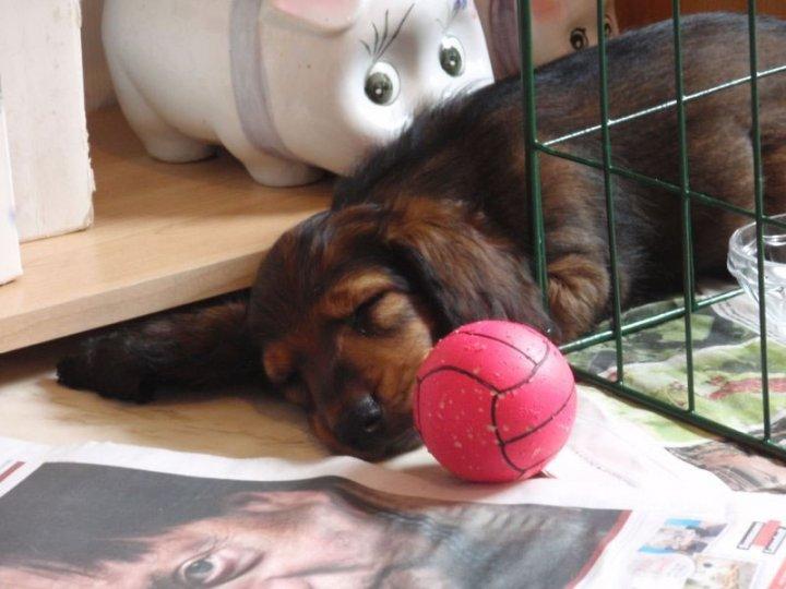 En liten valp Alf.